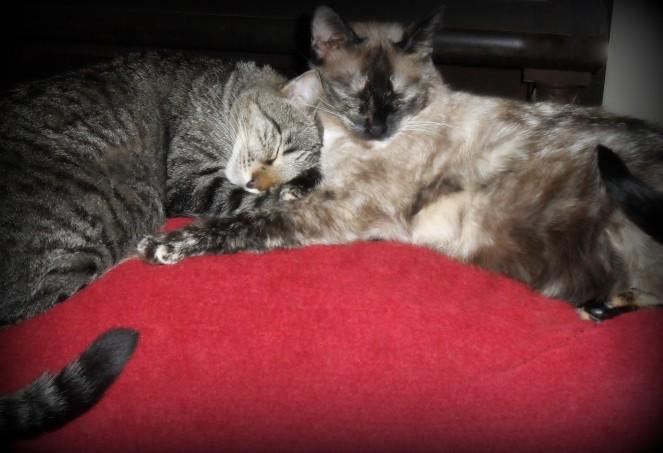 Our Feline Friends